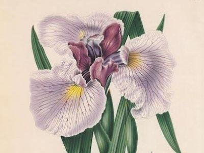 Tentoonstelling Botanical Art Worldwide: linking people with plants