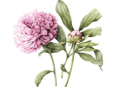 Botanisch tekenen op zaal door Margriet Honingh